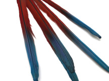 "Complete Set of 5 - 20-22"" Scarlet Red Macaw Tail Super Long Feather -Rare-"
