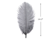 "10 Pieces - 14-17"" Silver Gray Ostrich Dyed Drab Body Feathers"