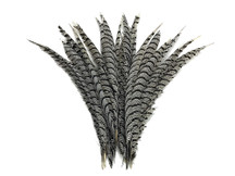 "5 Pieces - 20-25"" Natural Zebra Black And White Lady Amherst Pheasant Tail Super Long Feathers"