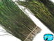 """10-12"""" Natural Iridescent Green Peacock Flue Feathers / Herl"""
