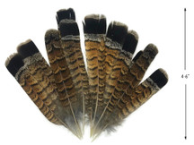 10 Pieces - Brown and Black Ruffed Grouse Tail Feathers