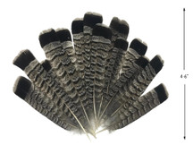 10 Pieces - Gray and Black Ruffed Grouse Tail Feathers