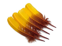 6 Pieces - Gryffindor Brown & Gold Two Tone Turkey Round Tom Wing Quill Feathers