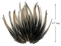 10 Pieces - Tan Dyed BLW Laced Long Rooster Cape Whiting Farms Feathers