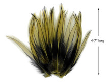10 Pieces - Golden Olive Dyed BLW Laced Long Rooster Cape Whiting Farms Feathers