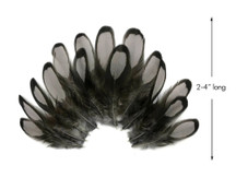 1 Dozen - Heron Gray Whiting Farms Laced Hen Saddle Feathers