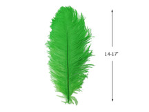 "10 Pieces - 14-17"" Light Green Ostrich Dyed Drab Body Feathers"