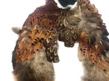 1 Piece - Incomplete Natural Ringneck Pheasant Skin Pelt