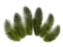 1/4 Lb - Olive Green Guinea Hen Plumage Polka Dot Feathers Wholesale (Bulk)