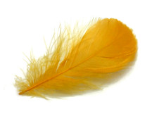 "1 Pack - 2-3"" Golden Yellow Goose Coquille Loose Feathers - 0.35 Oz."
