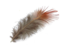 1 Pack - Natural Red Golden Pheasant Plumage Loose Feather 0.10 Oz.