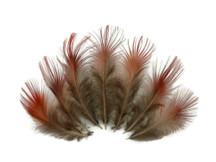 1/4 Lb. - Natural Red Golden Pheasant Plumage Wholesale Feather (Bulk)
