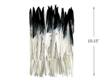 10 Pieces - White Tipped Black Goose Pointers Long Primaries Wing Feathers