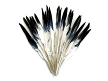 1/4 Lb. - White Tipped Black Goose Pointers Long Primaries Wing Wholesale Feathers (Bulk)