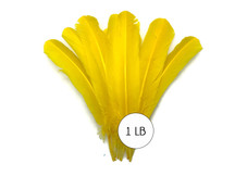 1 Lb. - Yellow Turkey Tom Rounds Secondary Wing Quill Wholesale Feathers (Bulk)