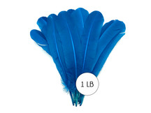1 Lb. - Turquoise Blue Turkey Tom Rounds Secondary Wing Quill Wholesale Feathers (Bulk)