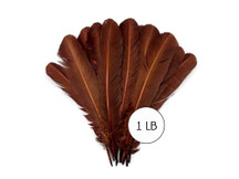 1 Lb. - Brown Turkey Tom Rounds Secondary Wing Quill Wholesale Feathers (Bulk)