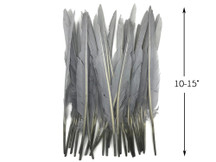 10 Pieces - Silver  Gray Goose Pointers Long Primaries Wing Feathers