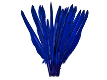 1/4 Lb. - Royal Blue Goose Pointers Long Primaries Wing Wholesale Feathers (Bulk)