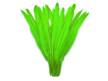 1/4 Lb. - Lime Green Goose Pointers Long Primaries Wing Wholesale Feathers (Bulk)