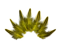 10 Pieces - Yellow Jungle Cock Loose Plumage Feather