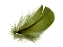 "1 Pack - 2-3"" Olive Green Goose Coquille Loose Feathers - 0.35 Oz."