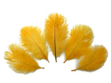 Wholesale Pack - Golden Yellow Ostrich Small Confetti Feathers (Bulk)
