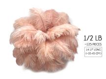 "1/2 Lb - 14-17"" Champagne Ostrich Large Drab Wholesale Feathers (Bulk) Swa"