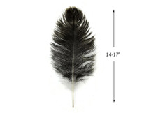 "10 Pieces - 14-17"" Natural Chinchilla Brown Ostrich Dyed Drab Body Feathers"