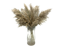 """5 Pieces - 20-24"""" Natural Ivory Preserved Dried Plume Reed Grass"""
