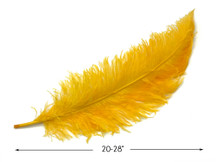 "10 Pieces - 20-28"" Golden Yellow Ostrich Spads Large Wing Feathers"