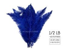 """1/2 Lb - Royal Blue Large Ostrich Spads Wholesale Feathers 20-28"""" (Bulk)"""