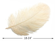 "10 Pieces - 18-24"" Cream Large Prime Grade Ostrich Wing Plume Centerpiece Feathers"