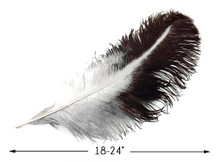 "10 Pieces - 18-24"" Natural Chinchilla Large Prime Grade Ostrich Wing Plume Centerpiece Feathers"