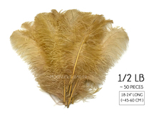 "1/2 Lb. - 18-24"" Old Gold Large Ostrich Wing Plume Wholesale Feathers (Bulk) SWA"
