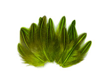 10 Pieces - Chartreuse Green Jungle Cock Loose Plumage Feather