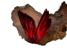 1 Piece - Red Dyed Over Natural Duck Pointer Wing Fan Trim Pad