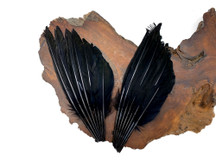 1 Piece - Black Dyed Duck Pointer Wing Fan Trim Pad