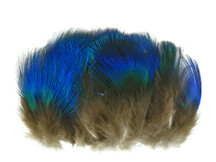 10 Pieces - Iridescent Blue Peacock Body Plumage Feathers