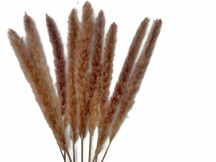 "20 Pieces - 20-25"" Natural Red Preserved Small Reed Pampas Grass"