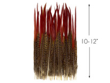 "10 Pieces - 10-12"" Natural Red Golden Pheasant Red Tip Loose Pointy Feathers"