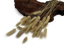"30 Pieces - 12-15"" Natural Beige Bunny Tail Preserved Dried Botanical Grass Bouquet"