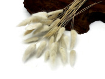 "30 Pieces - 12-15"" Bleached White Bunny Tail Preserved Dried Botanical Grass Bouquet"