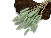 "30 Pieces - 12-15"" Mint Green Preserved Bunny Tail Dried Grass Bouquet"
