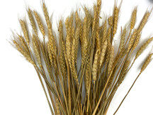"10 Pieces - 18-20"" Natural Tan Preserved Dried Botanical Wheat Grass"