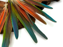 "4 Pieces - 6-10"" Tri Color Ombre Hybrid Macaw Small Tail Feathers - Rare-"