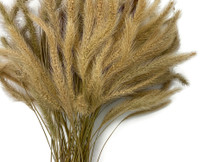 "100 Pieces - 18-20"" Natural Tan Dogtail Preserved Dried Botanical Grass"