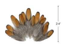 1 Dozen - Golden Brown Whiting Farms Laced Hen Saddle Feathers