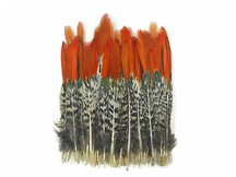 5 Pieces - Medium Natural Orange Tips Lady Amherst Pheasant Feather