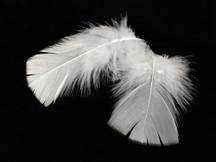 1 Pack - White Turkey T-Base Plumage Feathers 0.50 Oz.